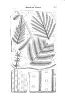 Страница 487