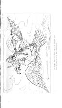 Страница 334